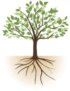 根をはる イラスト